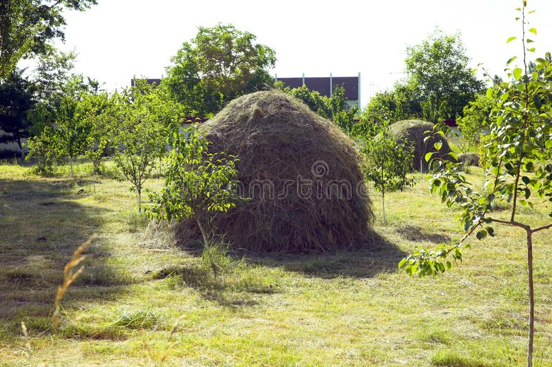 Hay stack on a field nearby a plum trees orchard - Image . Close-up of a single big haystack near green forest in summer season royalty free stock photos