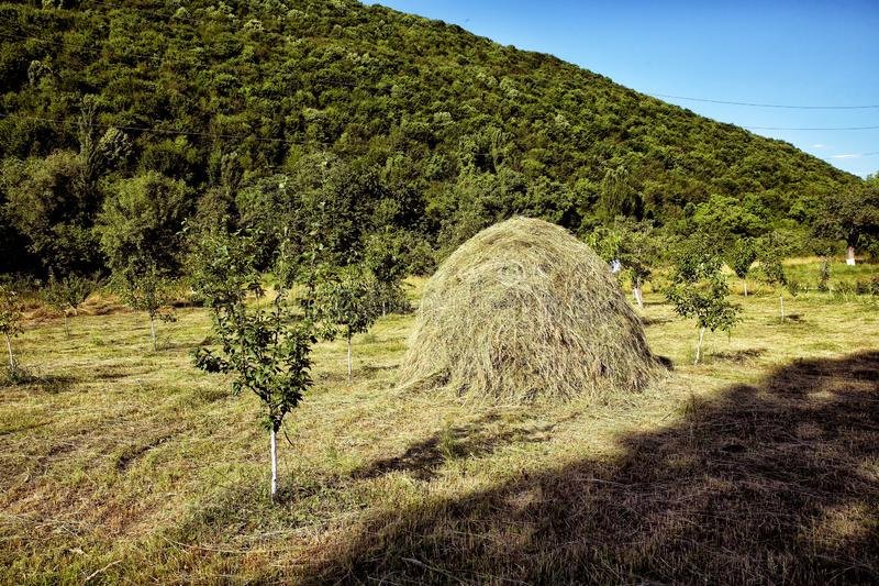 Hay stack on a field nearby a plum trees orchard - Image . Close-up of a single big haystack near green forest in summer season. Viewpoint on a landscape of royalty free stock image