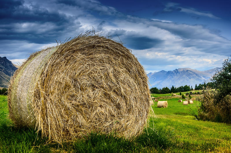 Hay stack in a summer field stock photo