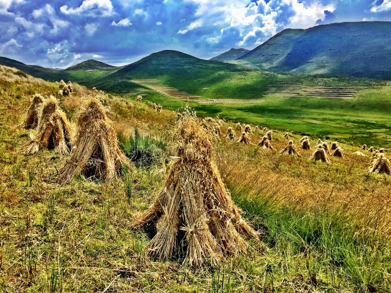 Haystacks on a Hill Side in Lesotho, Africa royalty free stock images