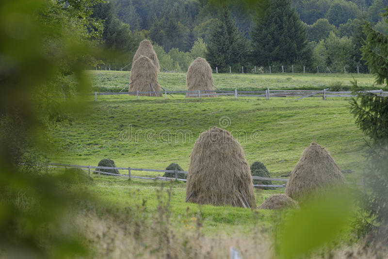 Hay stacks in green fields. Rustic hay stacks in green fields, Apuseni mountains, Romania stock photography