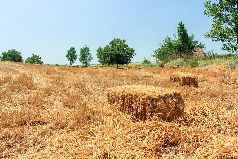 Hay and straw bales in the end of summer royalty free stock photography