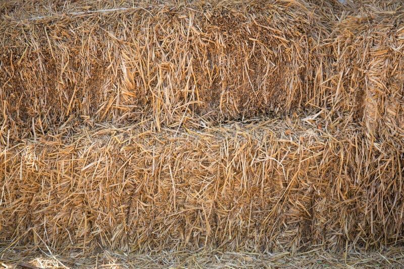 Hay straw royalty free stock photos