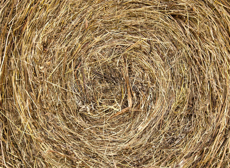 Hay texture. A bale of hay and straw background texture royalty free stock photos