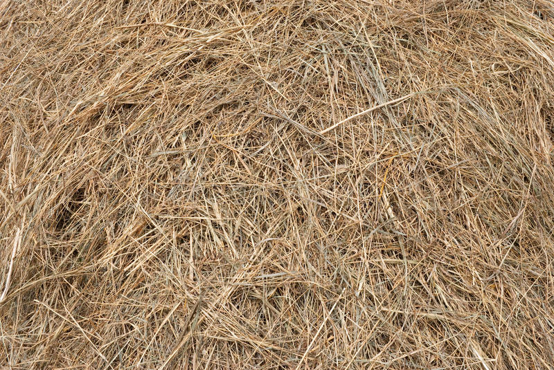 Download Hay texture stock photo. Image of organic, farm, brown - 26027210