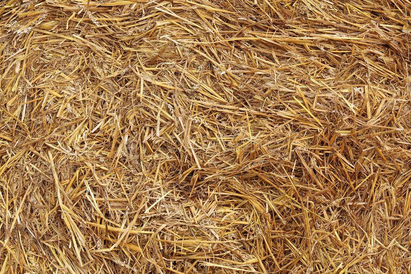 Hay texture stock photography