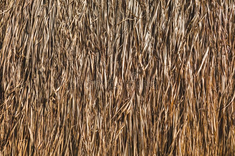 Hay texture. Background of tropical building roof. Eco construction concept royalty free stock images