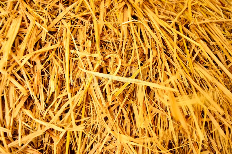 Hay texture. Hay bales are stacked in large stacks. Harvesting in agriculture. royalty free stock photo
