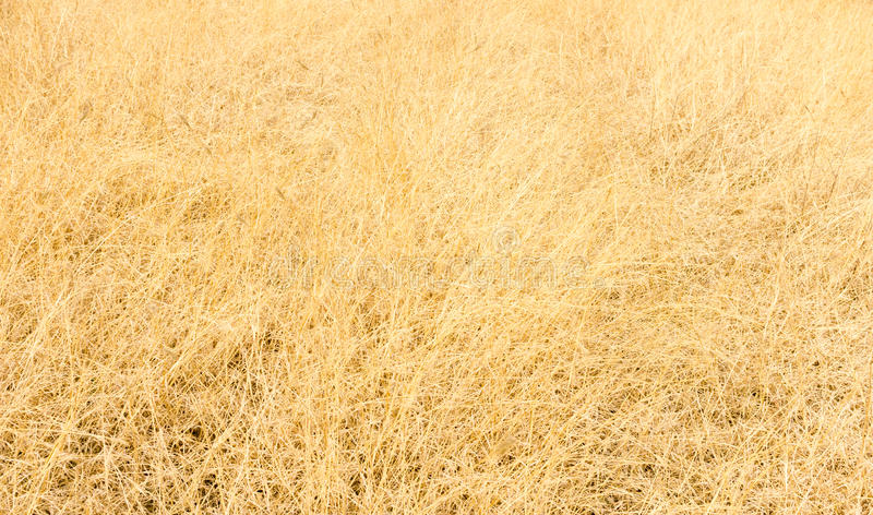 Download Hay texture stock photo. Image of texture, gold, foliage - 39512542