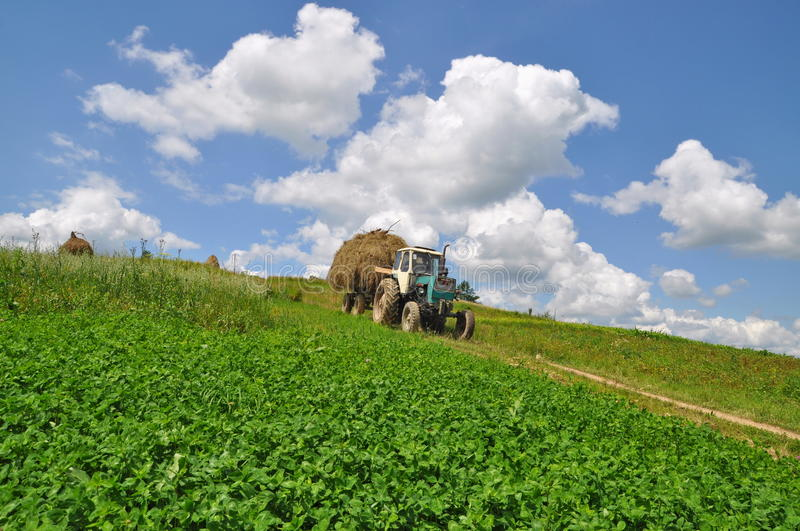 Hay transportation. A tractor with the trailer the loaded hay in a summer rural landscape with a young clover and white clouds stock image