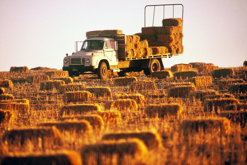 Download Hay Truck stock image. Image of abundant, compile, gather - 152633