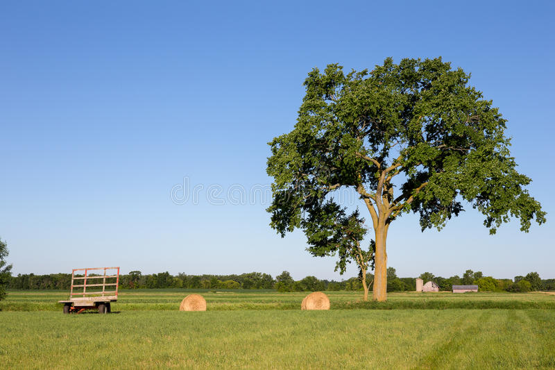 Hay Wagon und Hay Bales auf dem Gebiet unter großem Baum lizenzfreies stockbild