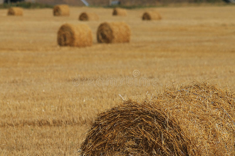 hay on yellow summer field royalty free stock photos