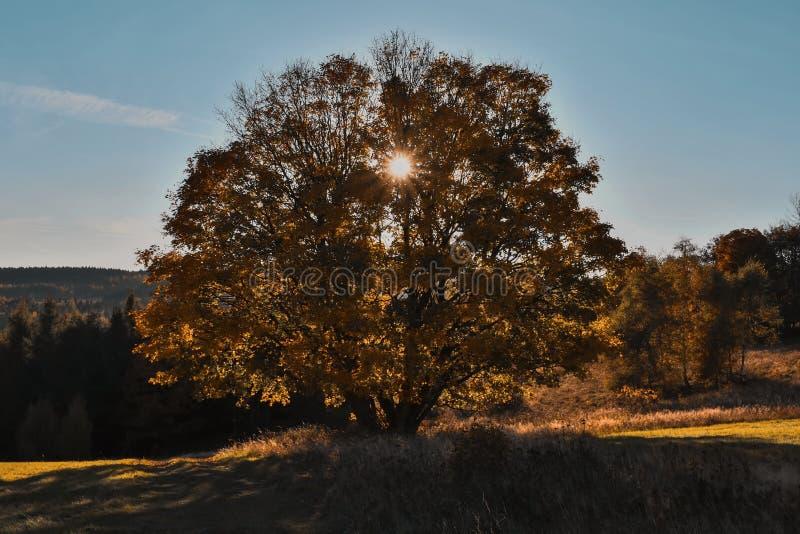 Haya grande vieja coloreada en colores del otoño foto de archivo libre de regalías