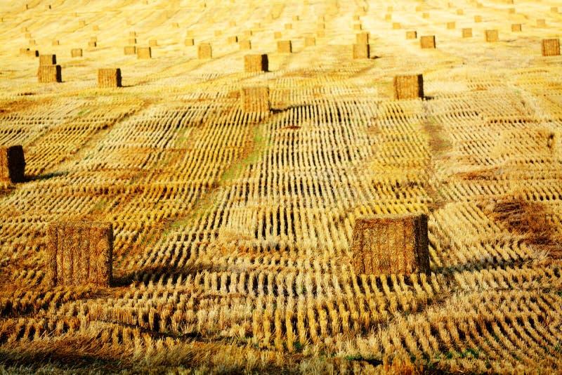Haybailrijen op Landbouwbedrijf royalty-vrije stock afbeelding