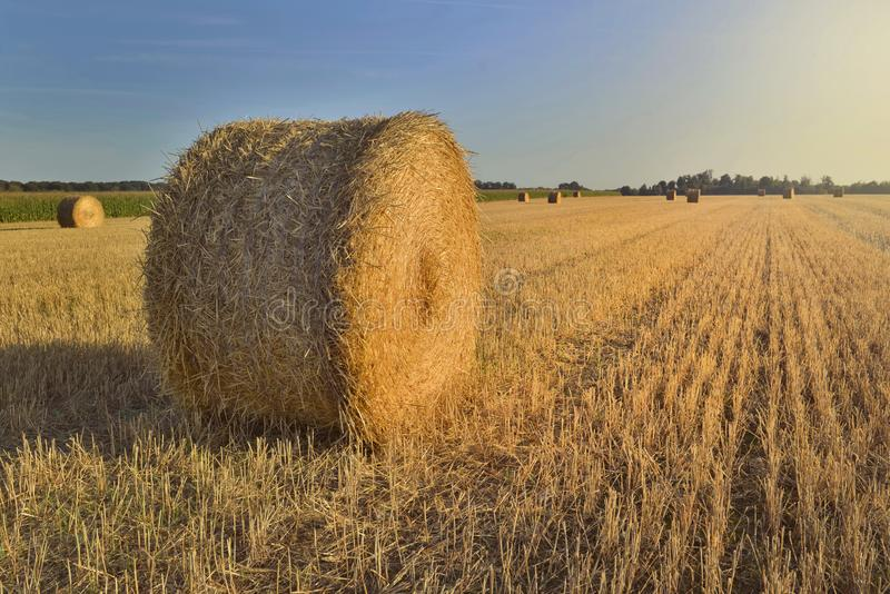 Haybale in a field at sunset stock image