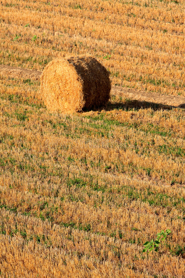 Haybale at the sunset