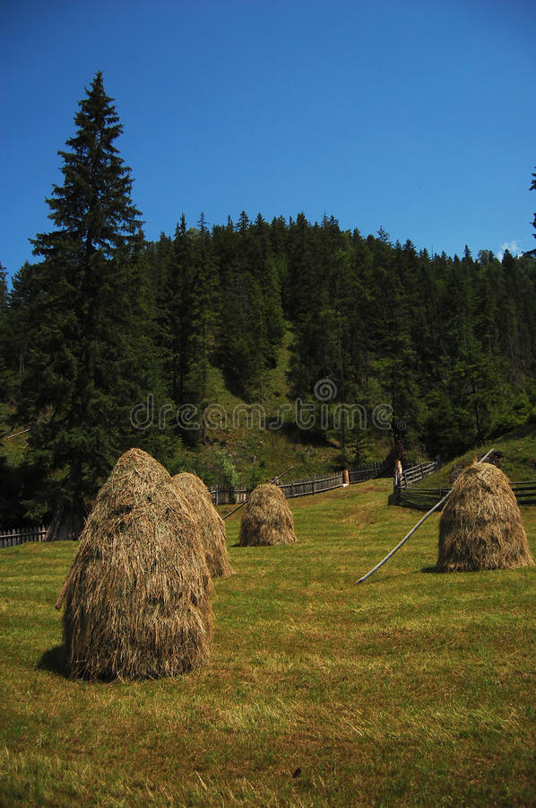 Haycock. Four Haycock in a summer day, Cindrel Natural Park,Romania royalty free stock image