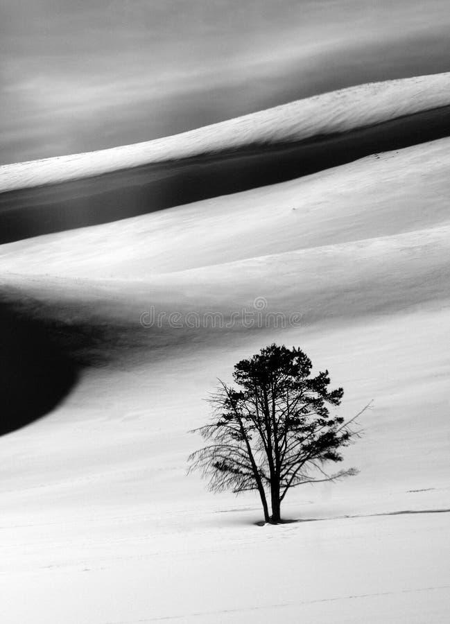 Hayden Valley Tree imagens de stock