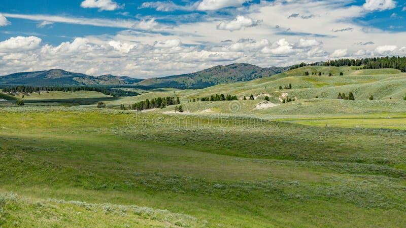 Hayden Valley in Yellowstone stockfotos