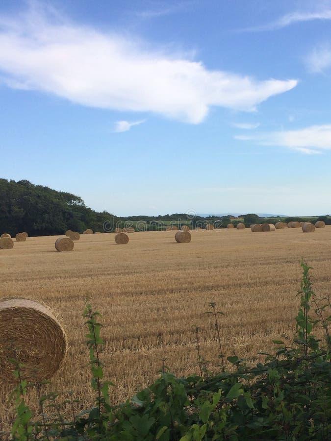 hayfield стоковые изображения rf