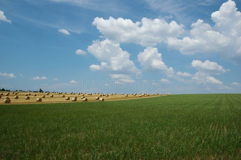 hayfield stock afbeeldingen