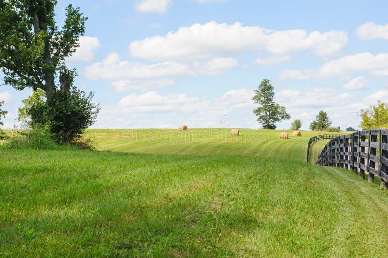 hayfield stock foto