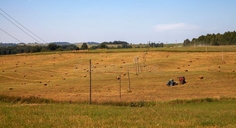hayfield Fieno che raccoglie il paesaggio soleggiato di autunno rotoli di fieno asciutto fresco nei campi il trattore raccoglie l fotografie stock libere da diritti