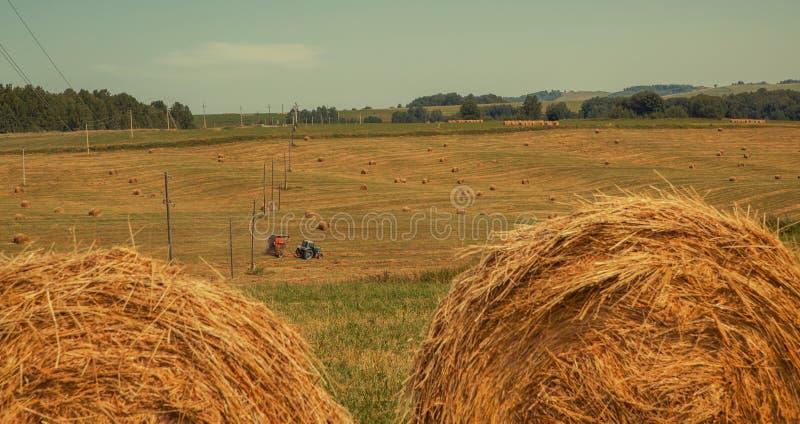 hayfield Foin moissonnant le paysage ensoleillé d'automne rouleaux de foin sec frais dans les domaines le tracteur rassemble l'he photo stock