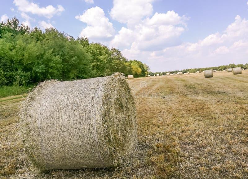 Hayfield in Garching-bei MÃ ¼ nchen stock fotografie