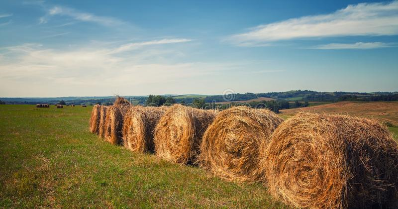 Hayfield. Hay harvesting Sunny autumn landscape. rolls of fresh dry hay in the fields. tractor collects mown grass. fields of stock photography