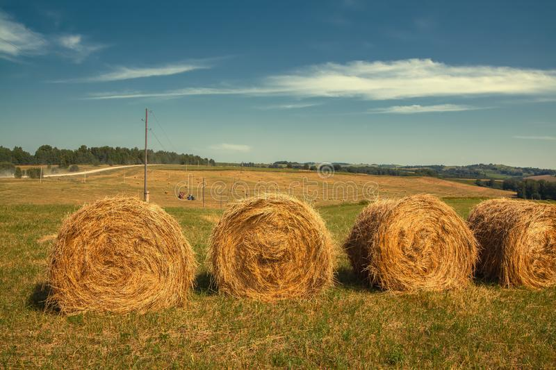 Hayfield. Hay harvesting Sunny autumn landscape. rolls of fresh dry hay in the fields. tractor collects mown grass. fields of royalty free stock image