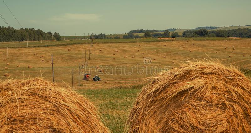 hayfield Hooi die Zonnig de herfstlandschap oogsten broodjes van vers droog hooi op de gebieden de tractor verzamelt gemaaid gras stock foto