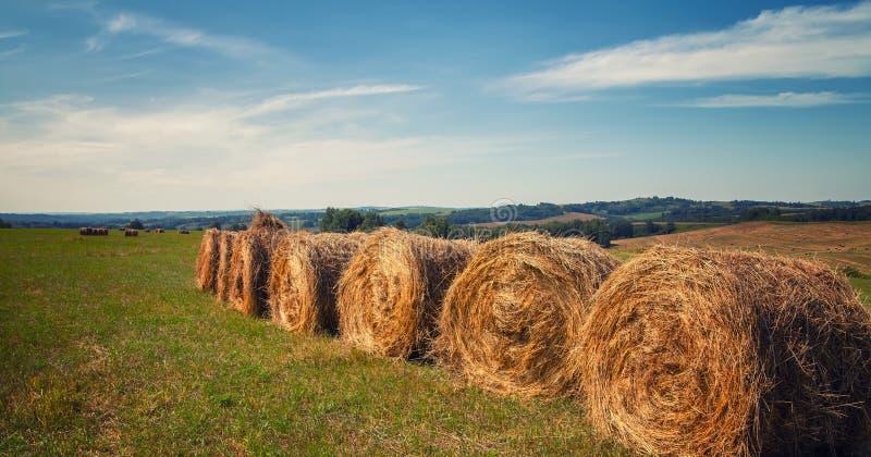 hayfield Hooi die Zonnig de herfstlandschap oogsten broodjes van vers droog hooi op de gebieden de tractor verzamelt gemaaid gras stock fotografie