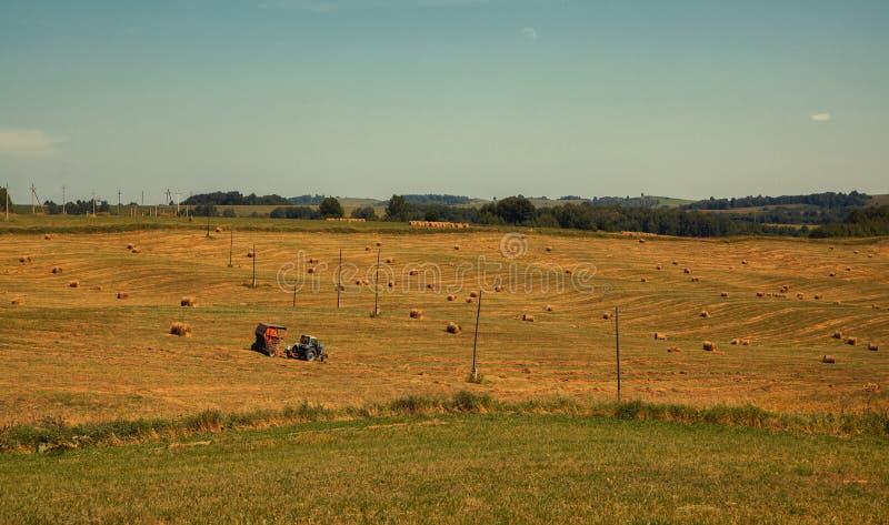 hayfield Hooi die Zonnig de herfstlandschap oogsten broodjes van vers droog hooi op de gebieden de tractor verzamelt gemaaid gras stock foto's