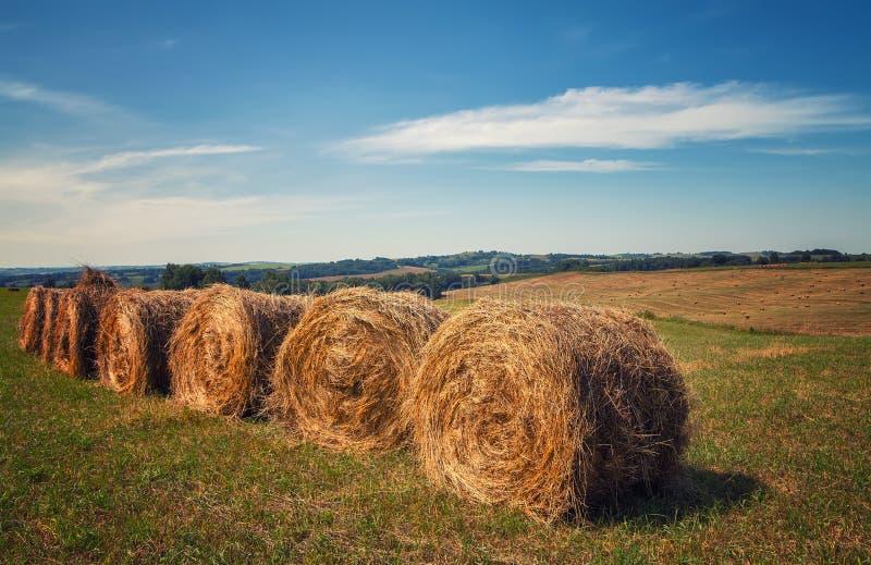 hayfield Hooi die Zonnig de herfstlandschap oogsten broodjes van vers droog hooi op de gebieden de tractor verzamelt gemaaid gras royalty-vrije stock foto