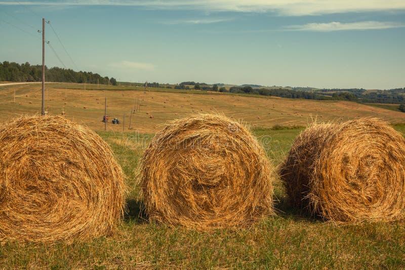 hayfield Hooi die Zonnig de herfstlandschap oogsten broodjes van vers droog hooi op de gebieden de tractor verzamelt gemaaid gras royalty-vrije stock foto's