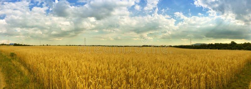Hayfield panorama stock afbeeldingen