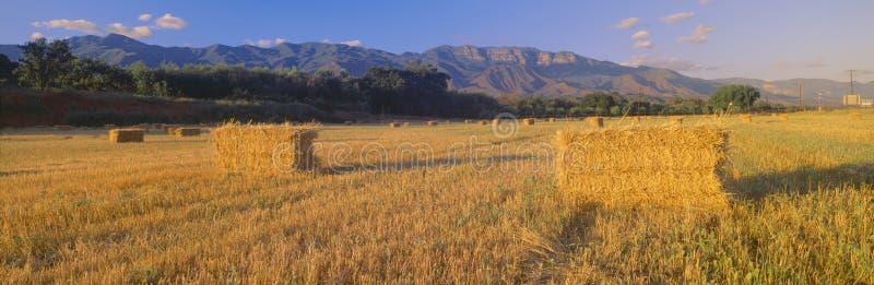 Hayfields in oberem Ojai-Tal, Kalifornien stockfotos
