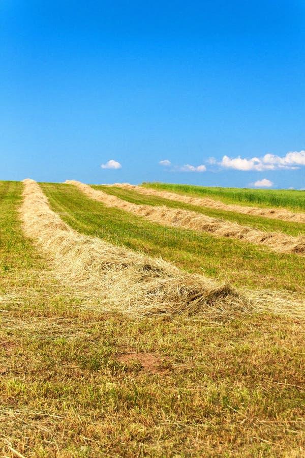 Haymaking на поле в чехии - Европа r Горячий летний день на ферме стоковые изображения rf