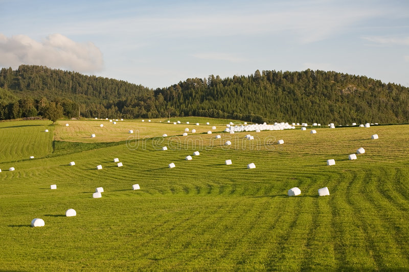 Haymaking royalty free stock photo