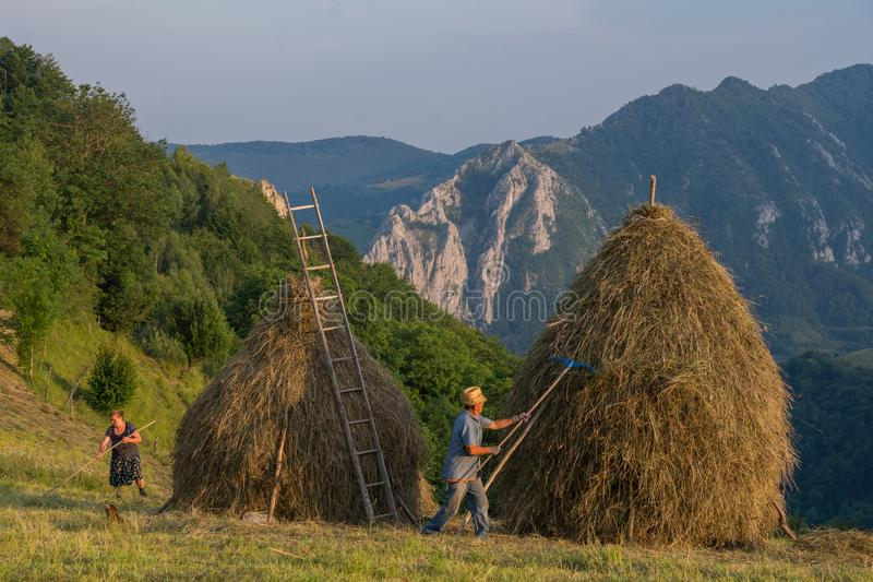 Haymaking and hay stack building in Apuseni Mountains, Transylvania, Romania. Traditional haymaking in the Apuseni Mountains, Transylvania region in Romania stock photo