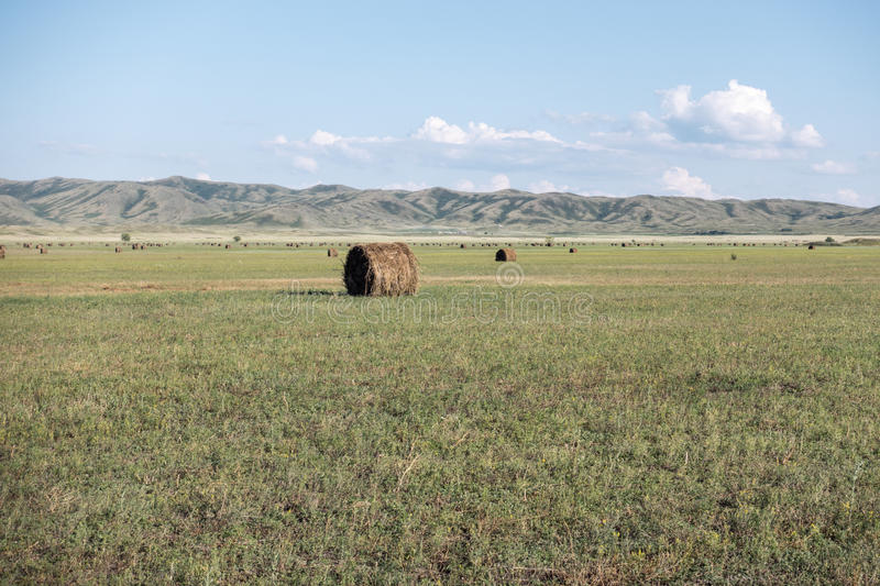 Haymaking meadow with background of mountains. East Kazakhstan Region.  stock image