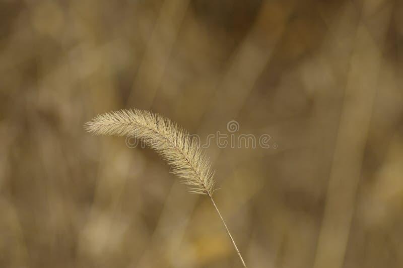 hayseed стоковое фото rf