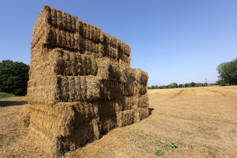 Haystack. Big haystack on the field in the summer in Poland royalty free stock images