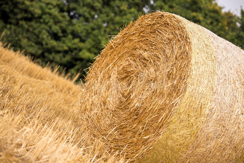 haystack photos stock