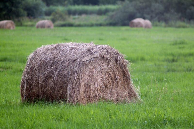 haystack στοκ εικόνες