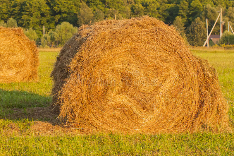 Haystack in a field on background of forest stock image
