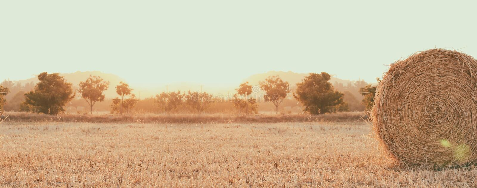 Haystack on the field. Sunset time. Harvest season. Long banner photo. Header format. Your text space royalty free stock image