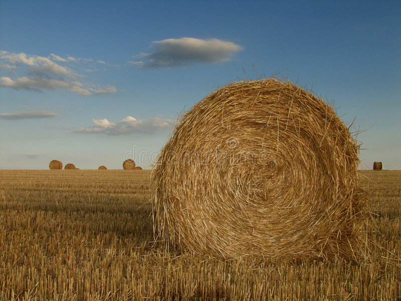 Download Haystack france stock photo. Image of crops, wasigny, ardennes - 151396